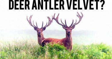 Deer Antler Velvet - Deer Antler Spray